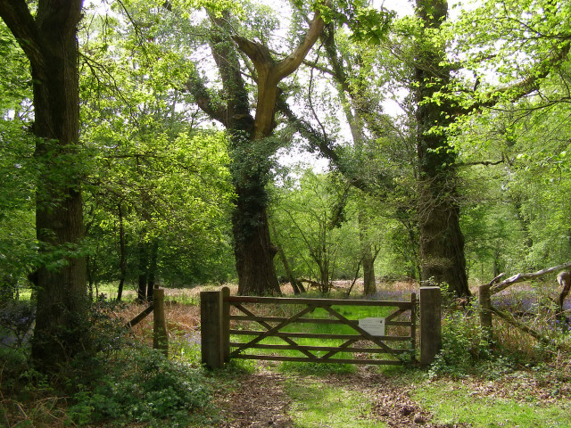 Gateway to Roydon Woods nature reserve