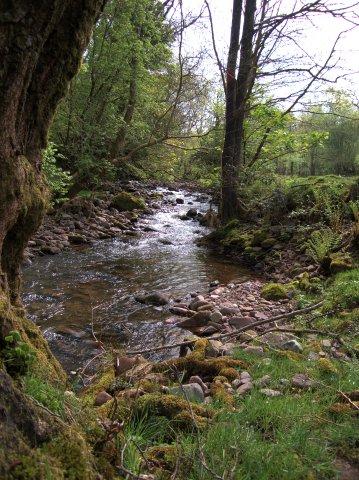 Afon Sychlwch