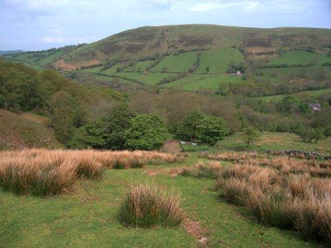 Woods near the Afon Sychlwch