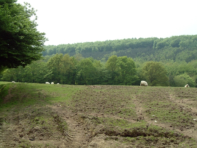 High Wood from Netherfield Place Farm