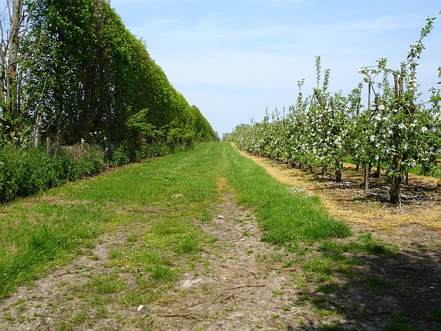 Orchard near Homestall Farm