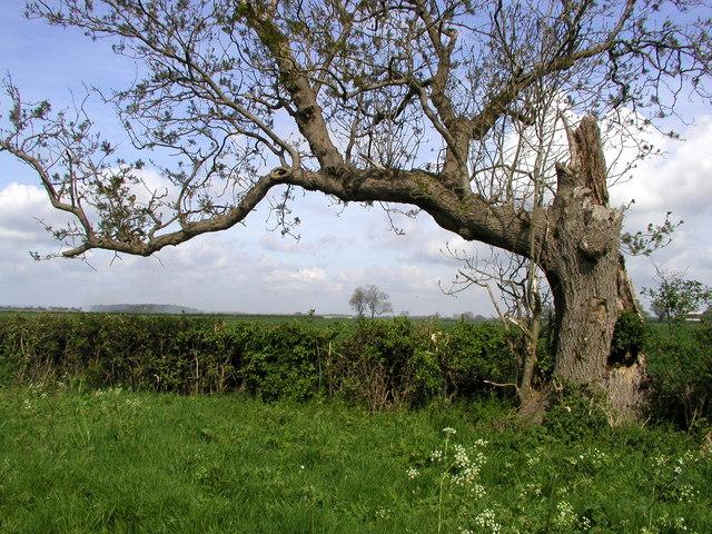 Carr Lane View