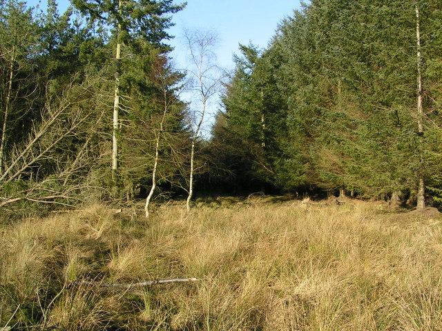 Woodland above Muirlands Farm
