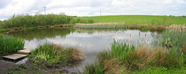 Hedley Frog Pond