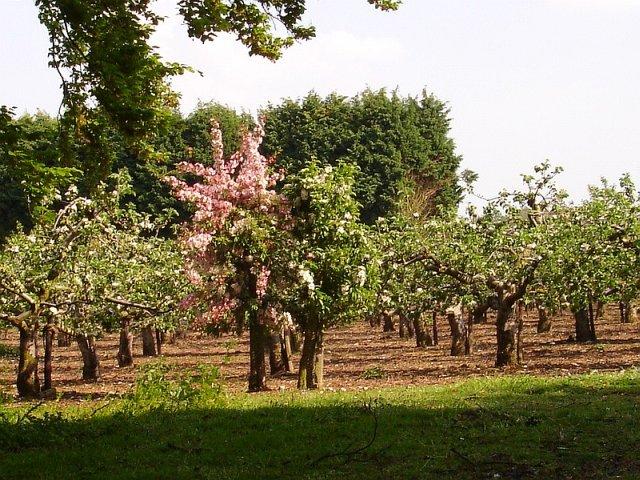 Orchard pollinators