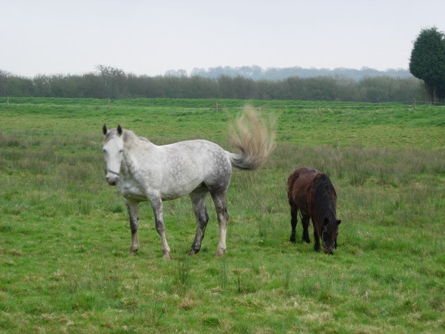 Newenden-Hill House-horses.
