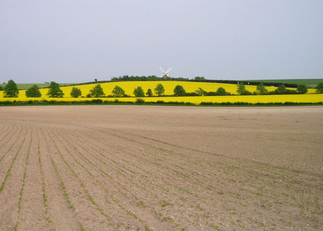 Fields near Fulbourn