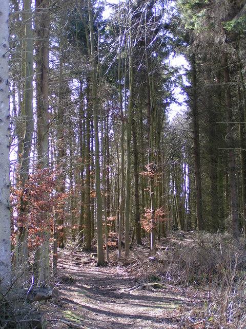 Huntly Wood