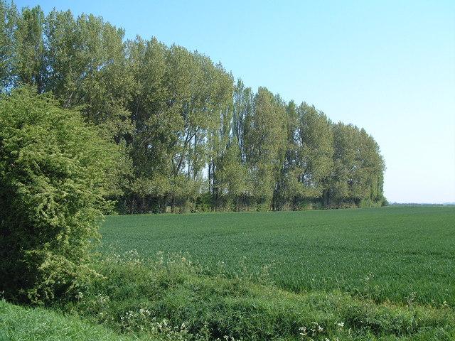 Near Ellicar Farm