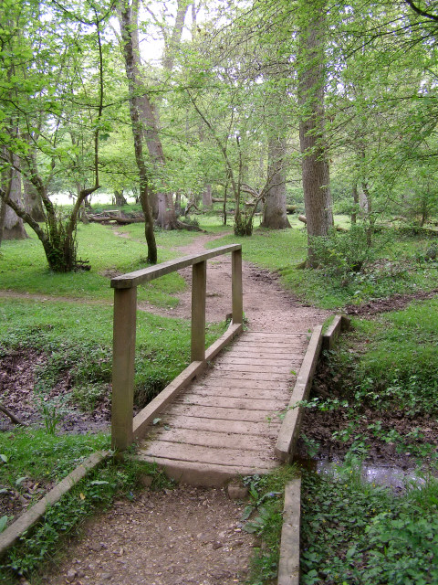 Footbridge in Ivy Wood, New Forest