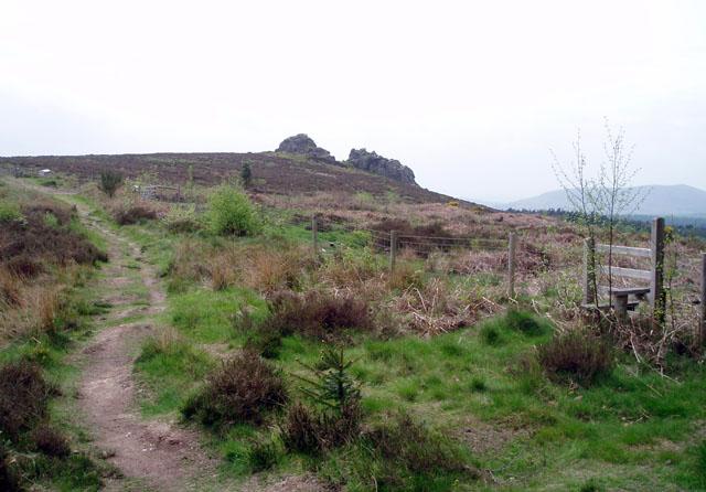 Edge of the forest near Nipstone Rock
