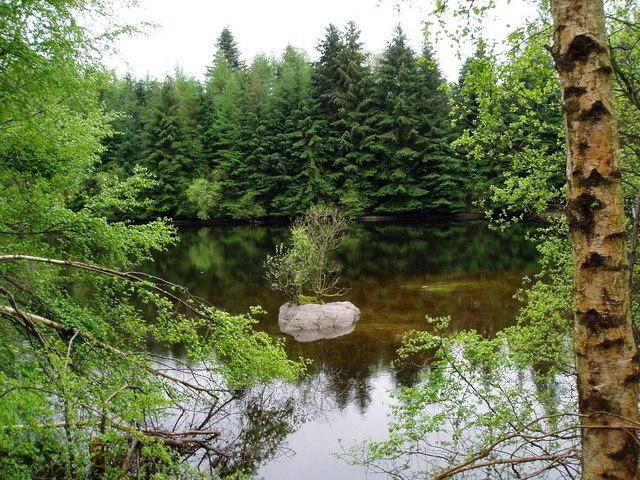 Reservoir in Cynwyd Forest