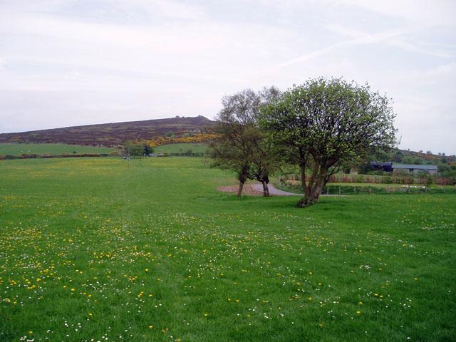 Meadow on the Stiperstones ridge