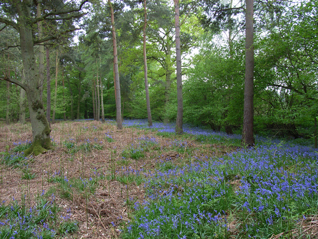 Woodland near Blackbushes Road