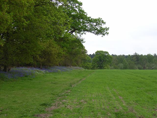 Wood and farmland, Word Hill