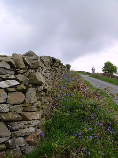 Wall and Bluebells