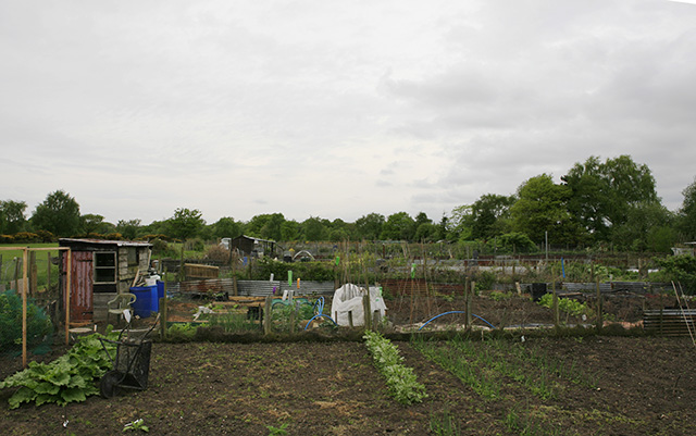 Allotment Gardens, Brockenhurst