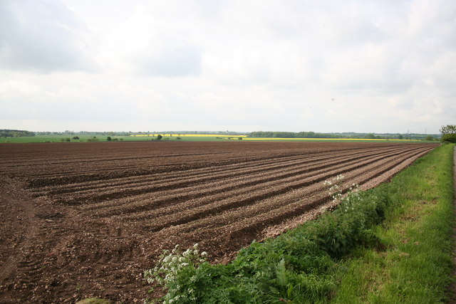 Farmland near Stancil