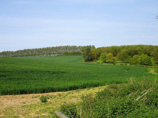 Farmland SE of Provender