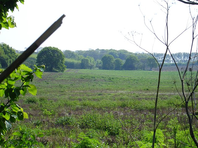 Stubble on Beacon Hill, south of the A2