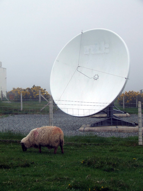 A sheep and a satellite dish