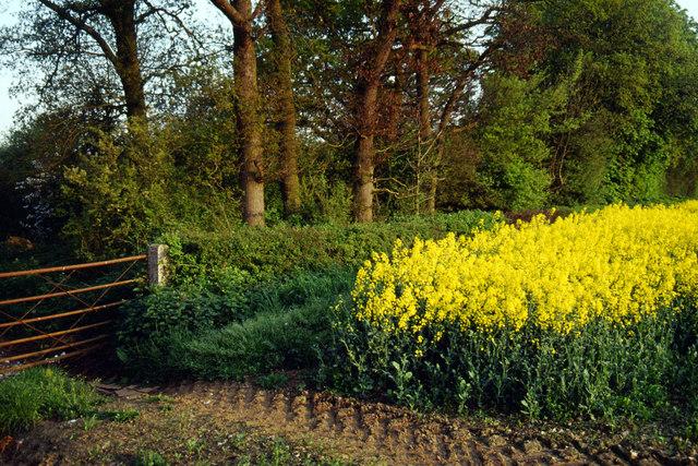 Farmland near Cloudesley Bush
