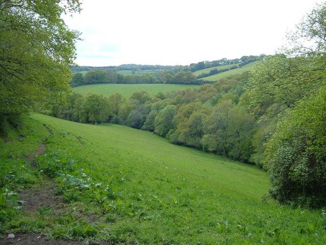 View beside Moor Copse, Doddiscombsleigh