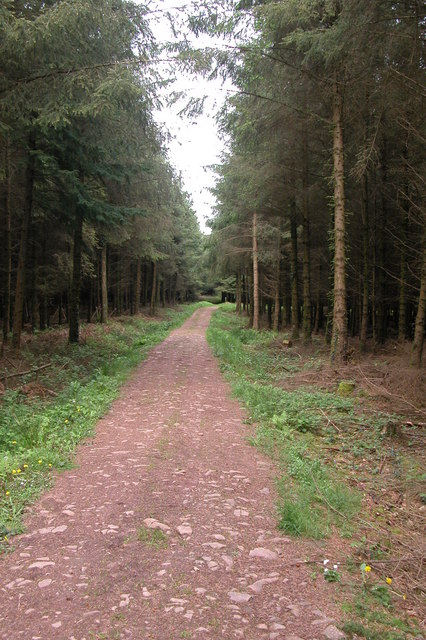 Eggesford Forest