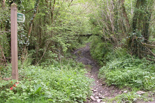 Bridleway into Eggesford Forest