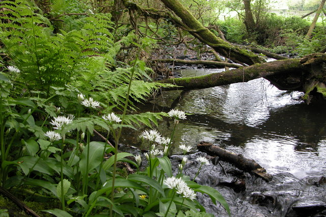 Mully Brook
