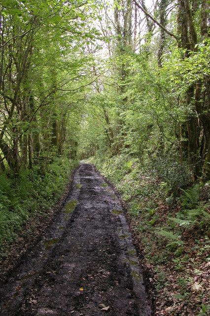 Track to Ash Mill, Ashreigney