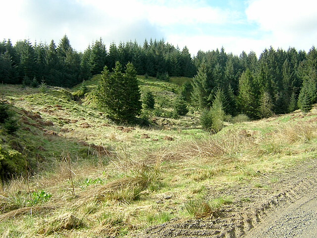 Hillside in Carron Valley Forest