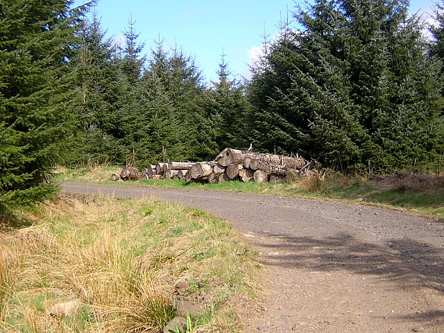 Log Pile in Carron Valley Forest