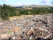 NS6783 : Felled Forest by Iain Thompson