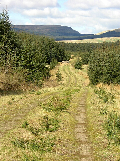Track in Carron Valley Forest