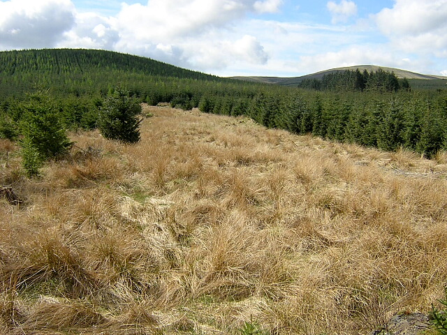 Clearing in Carron Valley Forest