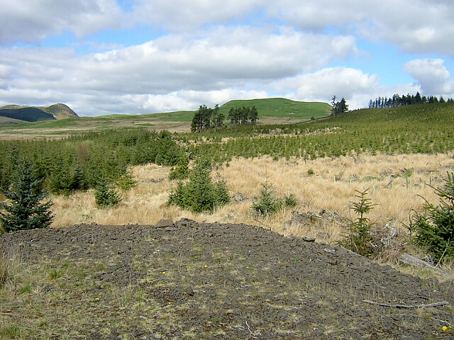 Replanted Area of Carron Valley Forest