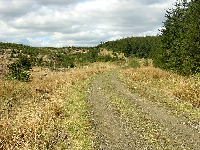 Forest Track on Gartcarron Hill