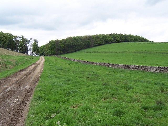 Pits Hill