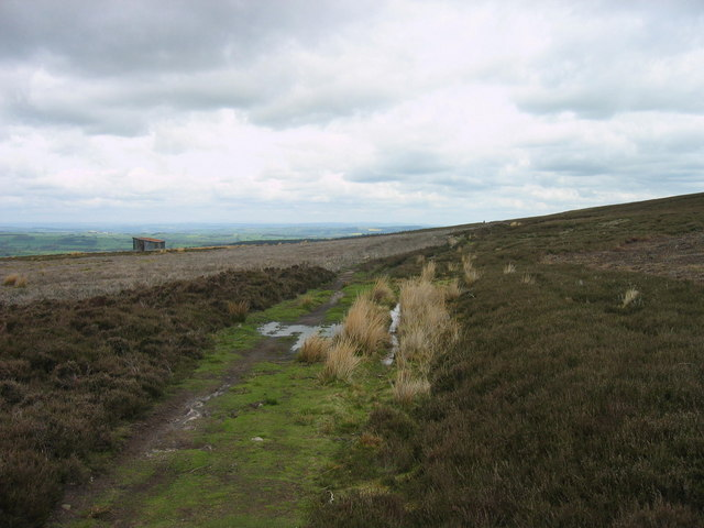 Carrier's Way on Bulbeck Common