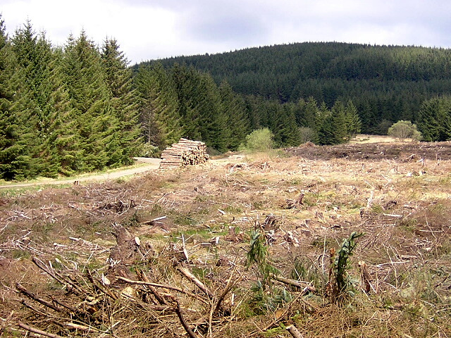 Felled Forest Near Kirk o' Muir Cemetery