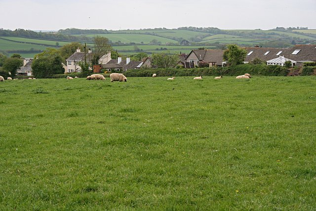 Sheep Grazing and Houses