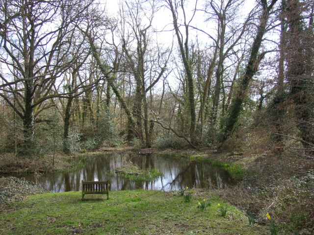 Pond, Hambledon