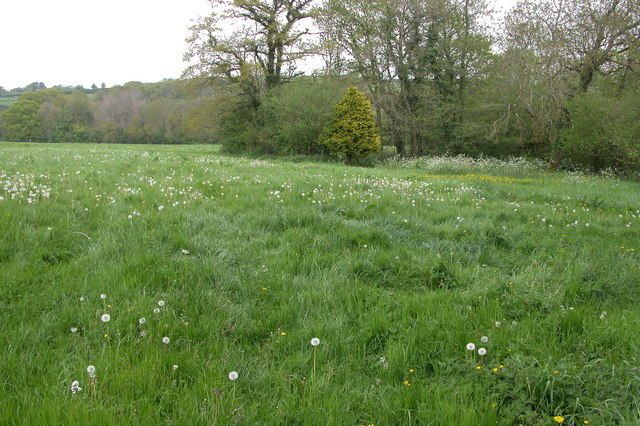 Meadow by Calves Bridge