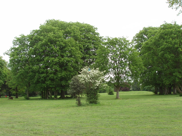 Hornbeam and Hawthorn, Halliford Park