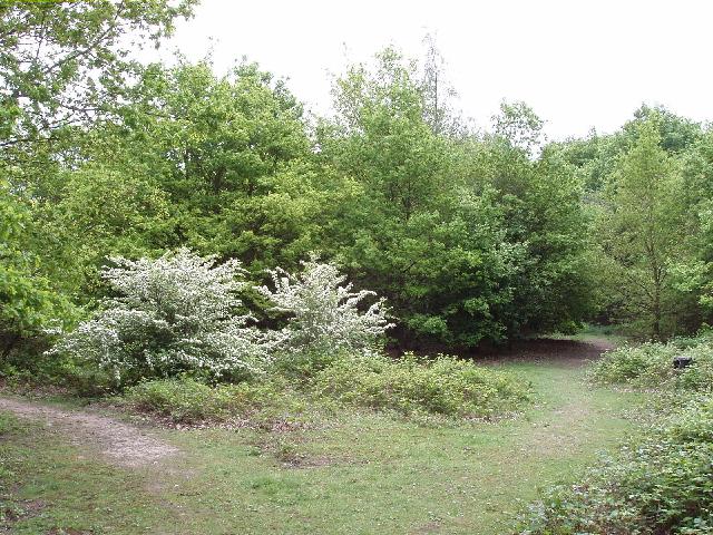 Hare Hill Open Space, near Addlestone