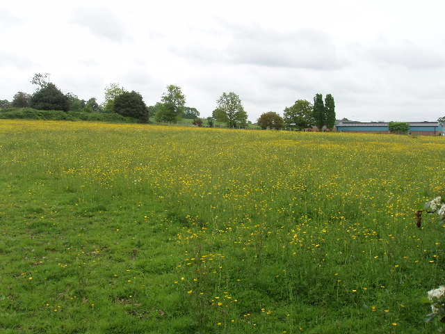 Meadow with buttercups, Hall's Farm, near Woodham