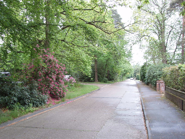 Priory Close and rhododendrons, Sheerwater