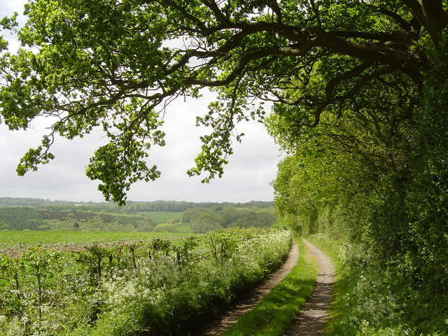 Green Lane near Warren Farm, Shalden