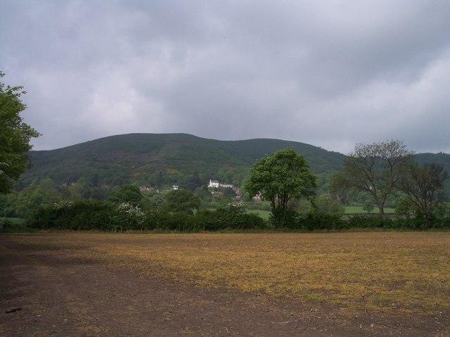 Sprayed Field, Brickbarns Farm